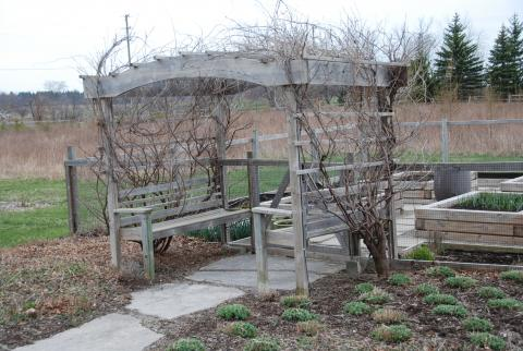 Late fall landscape is given interest with a pergola in Oakville, by Great Lakes Landscape